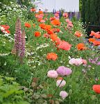27 hagefavoritter fra 2011