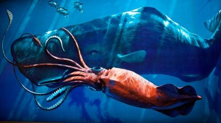 Many Believe That The Terrible Kraken Of Ancient Myth May Have Been Based At Least In Part On This Real Life Monster