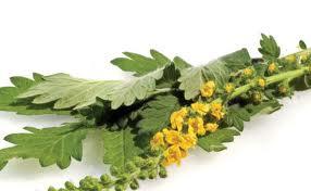 Tratament naturist impotriva crizelor de astm bronsic