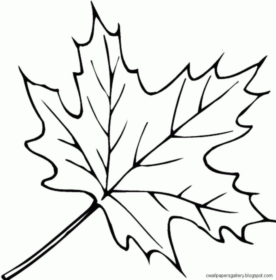 leave coloring pages autumn leaves drawing wallpapers gallery