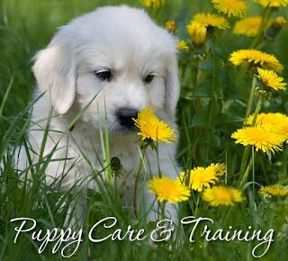 Chăm sóc chó sơ sinh luôn là việc quan trọng.