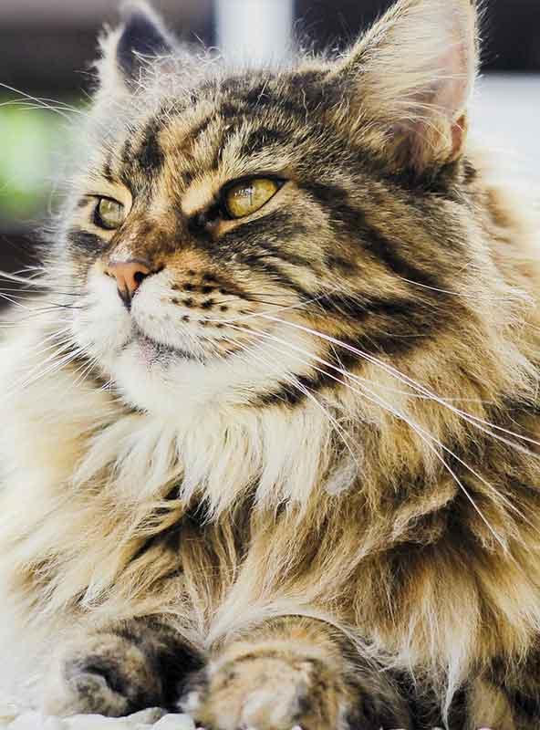 Meoow Meow