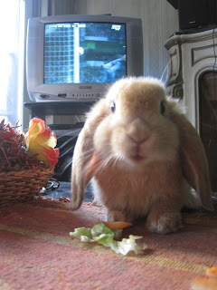 Conejo adoroso