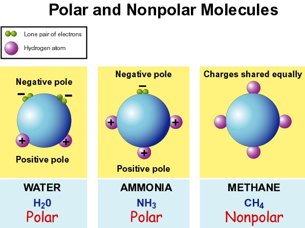 Chemistry Time Polar Molecules