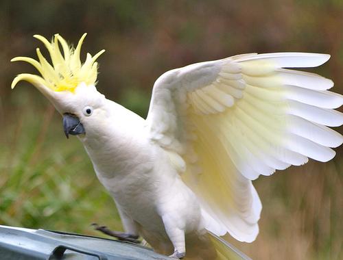 Exotic Birds For Sale >> Exotic Birds For Sale Funny Animal