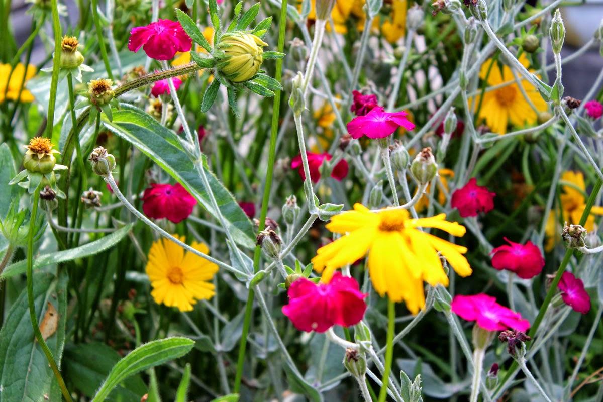 yellow flowers, garden, poland, girl's world