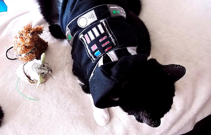 Darth Vader Star Wars cat