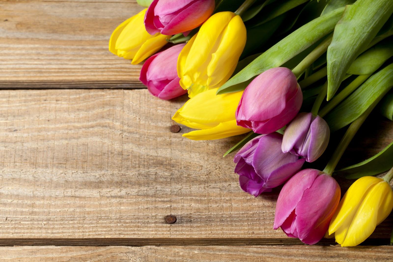 Banco De Im Genes 22 Fotograf As De Tulipanes De Colores