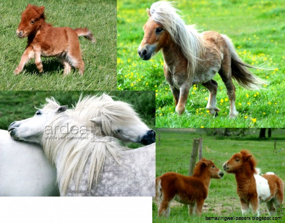 Topic   cute baby horses  ShowMe Online Learning