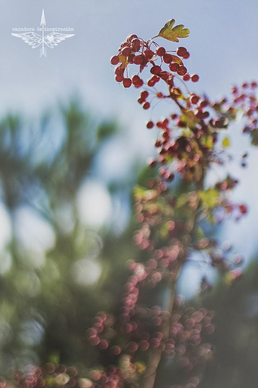 Collserola natural park Barcelona Autumn Cazadora de inspiración © Anna Tykhonova