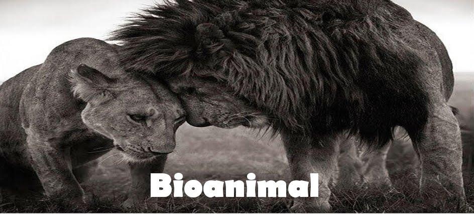 Bioanimal