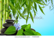 PhilAsian Herbs