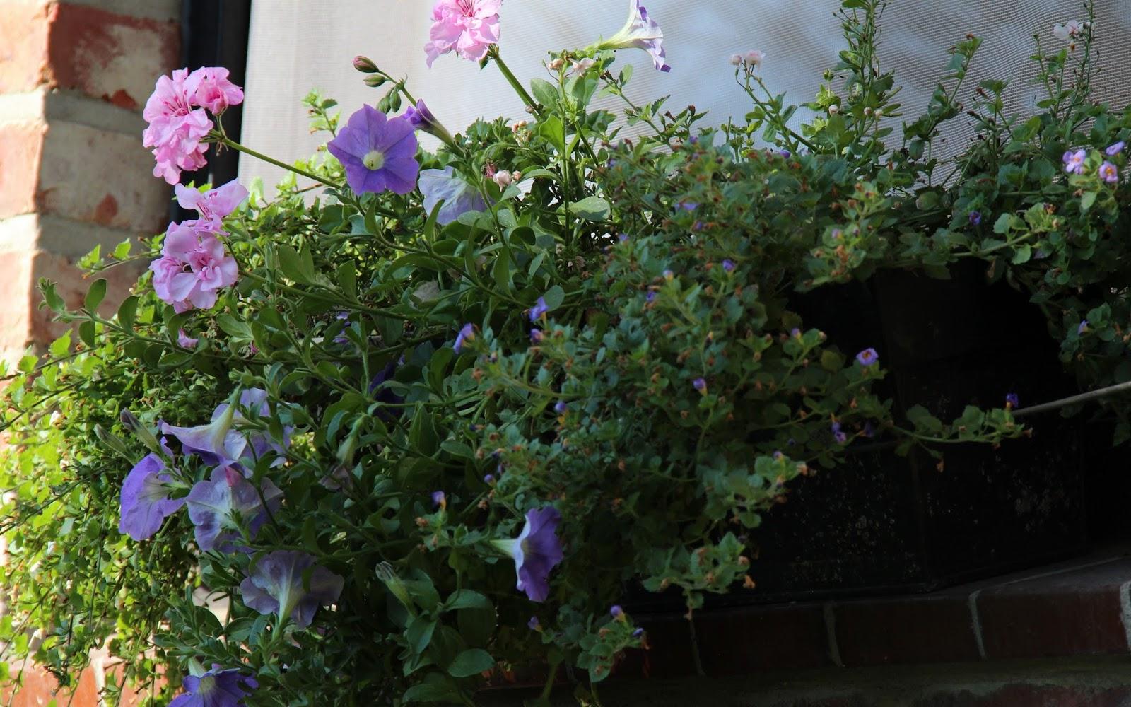Jardiniere plein soleil good fleurs de balcon en plein soleil u ides inspirantes sur les with - Plantes exterieures plein soleil ...