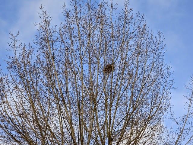 Le vieux clos sous le vent for Supprimer la mousse de la pelouse