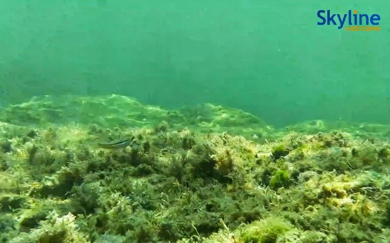 Underwater Web Cam