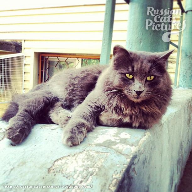 Sad Instacats Cat 09