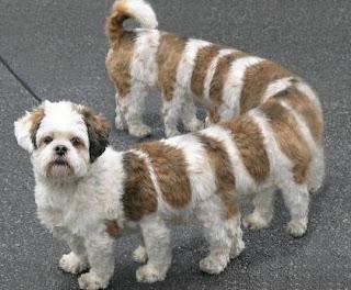 Funny Animals Dog