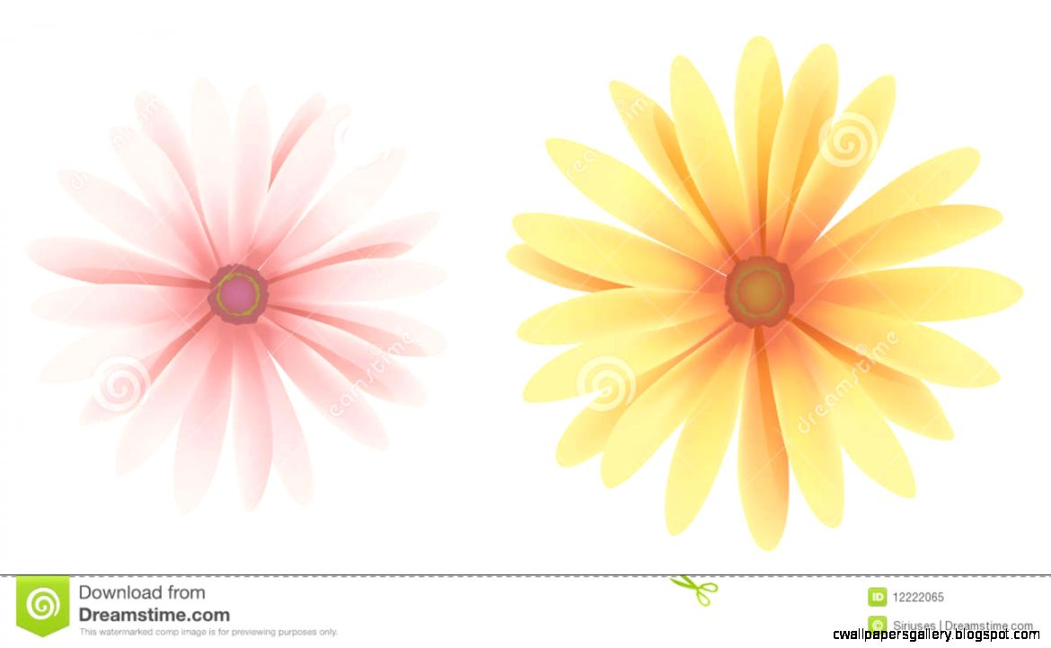 Daisy Royalty Free Stock Photo   Image 12222065