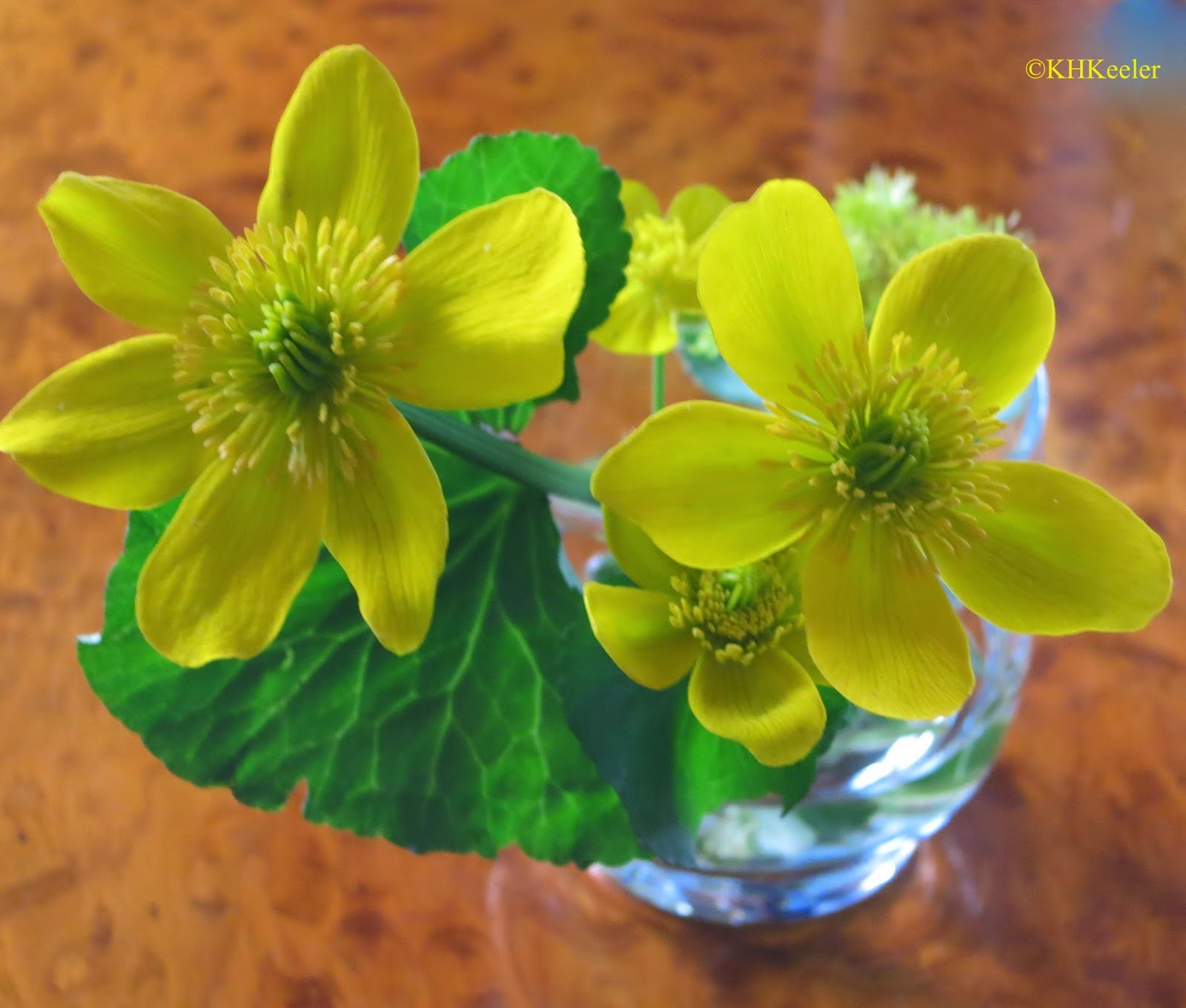 marsh marigolds in a glass