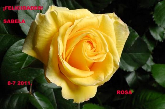 Felicitación por mi santo de Rosa