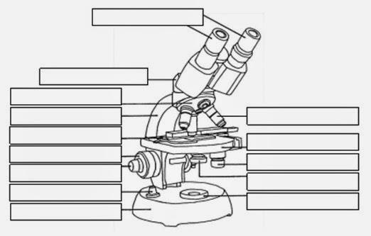 BLOG 2 SEGUNDO DE BACHILLERATO BIOLOGIA: Partes del microscopio ...