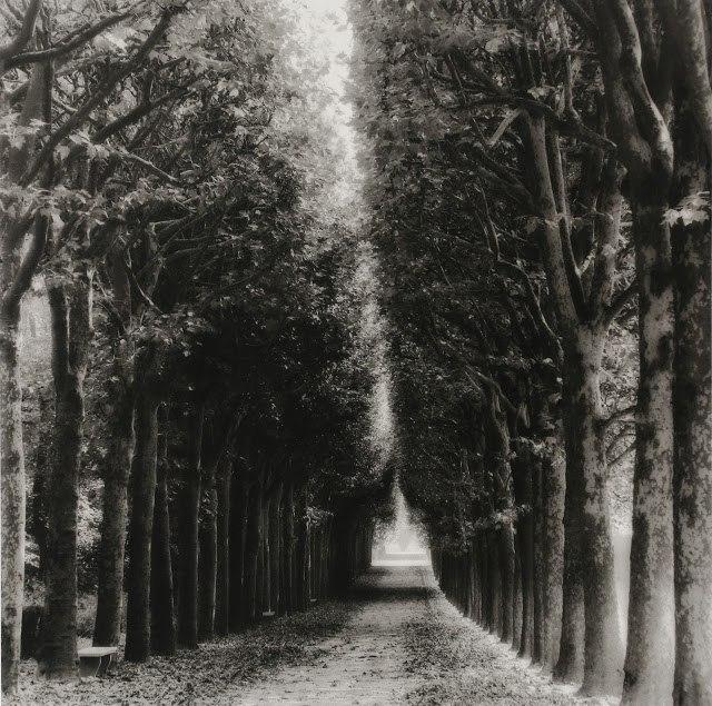 Hazy Lights and Shadows by Lynn Geesaman