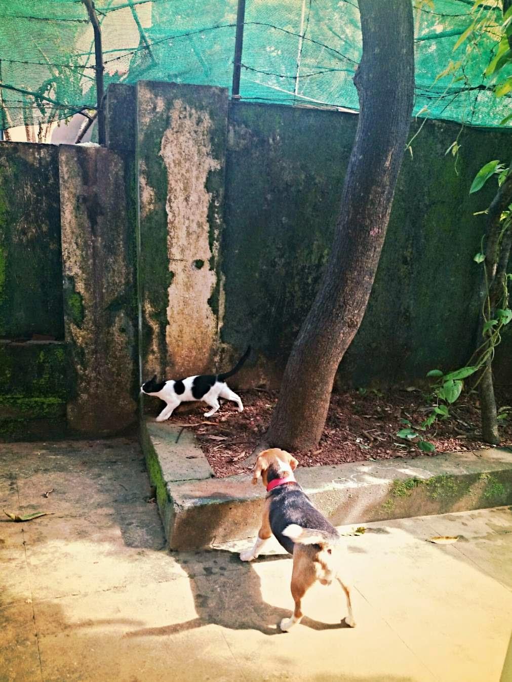 dog Godyears beagle