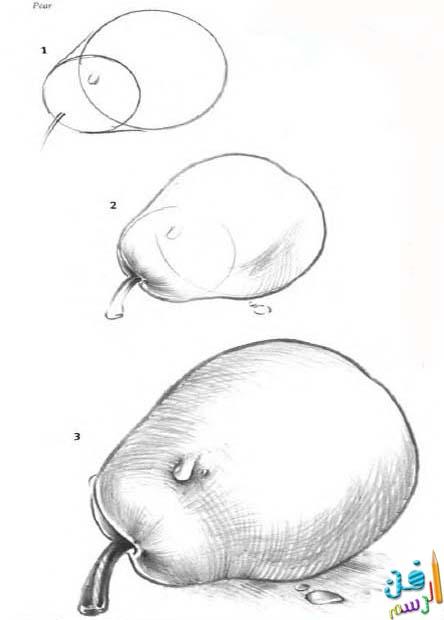 رسم القواكه ,رسم الإجاص بقلم الرصاص