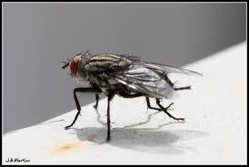 Qué significa soñar con bastantes moscas