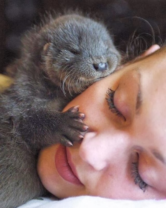 Funny animals of the week - 17 January 2014 (40 pics), baby otter hugging woman face