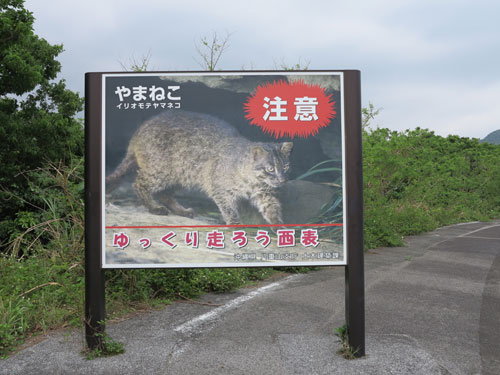 Iriomote Cat Beware Sign For Drivers