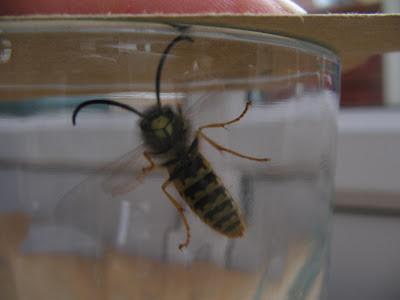 Hornet or wasp or bee
