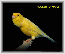 Roller o Harz
