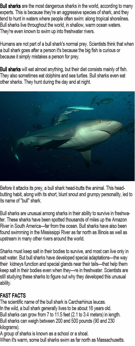 Bull shark facts for kids
