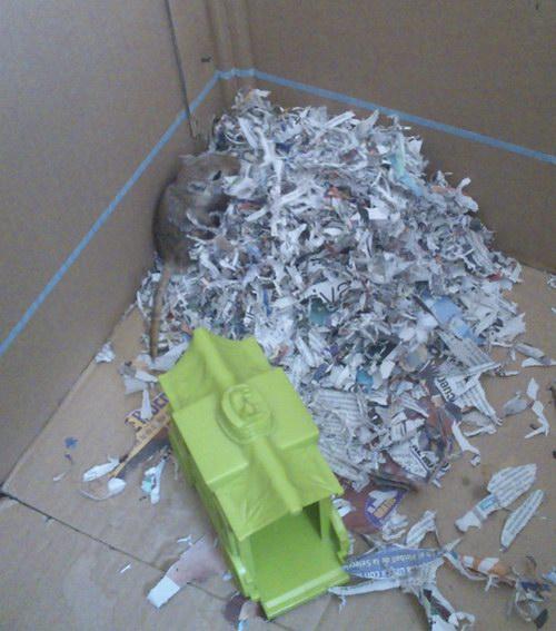 El nido de papeles que construyó por la noche