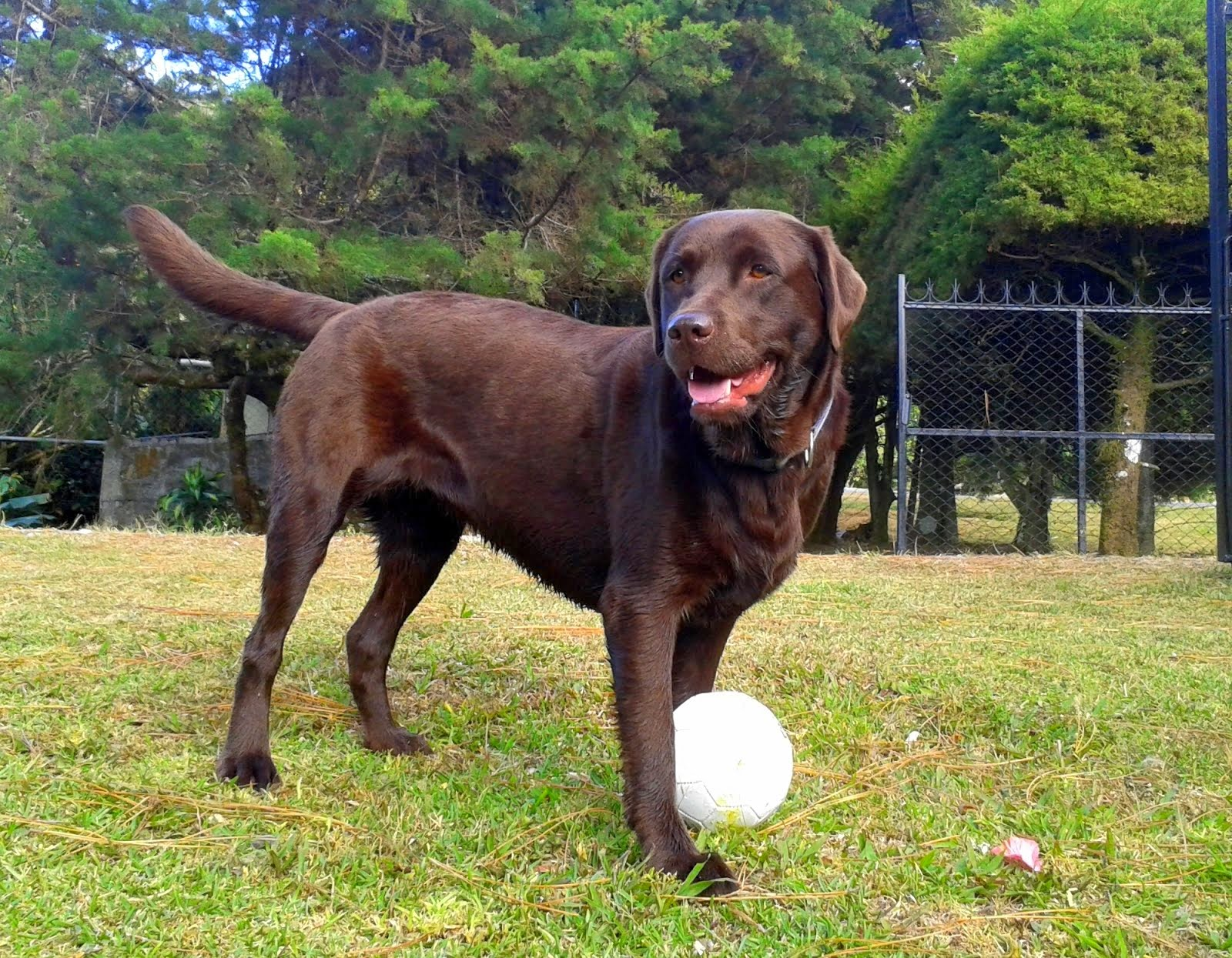 Meet Cieba - Canine Therapist