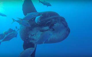Impactante criatura encontrada en el oceano