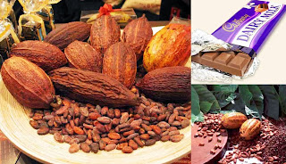 How to Start a Cocoa Farming Business