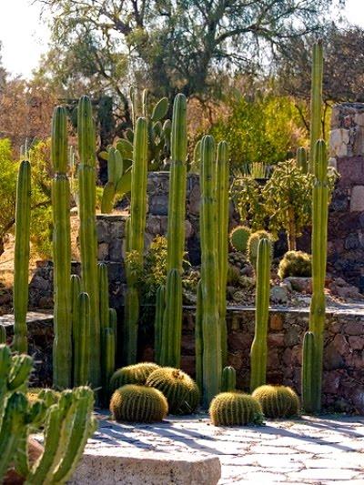 12 maravillosos jardines de cactus dise os creativos for Jardines con cactus