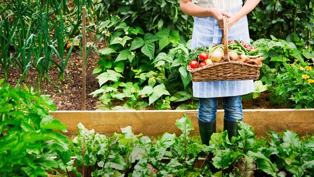 Faw arquitectura y geograf a reas de cultivo en casa for Cultivo de verduras en casa