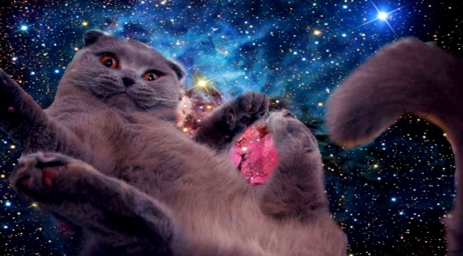 cats tumblr galaxy wallpapers gallery