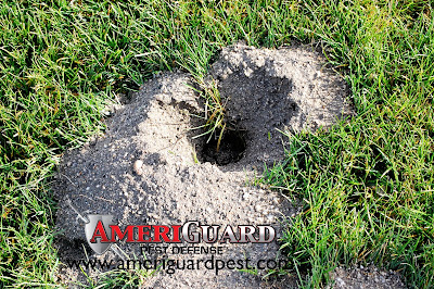 Gopher Exit Hole