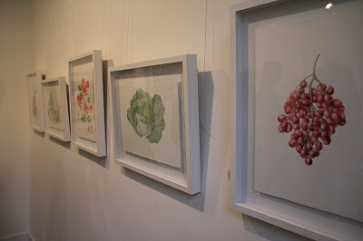 The Botanical Paintings all in a Row