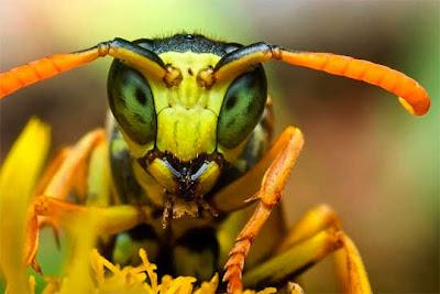 Foto super close-up serangga