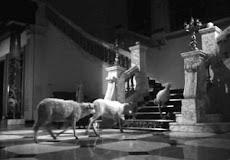 ... de mis pelis favoritas: El Ángel Exterminador - 1963 - de Luis Buñel