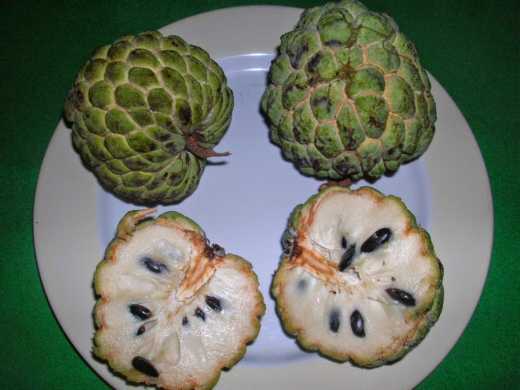 Custard Apples –Super Fruit With Significant Antioxidant, Anti-Diabetic, Anti-Cancer and Anti-Obese Properties
