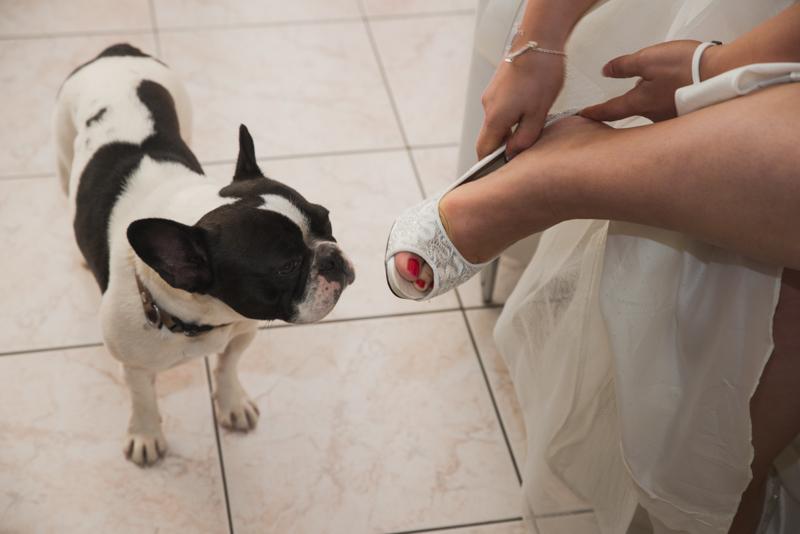 chien de la mariée