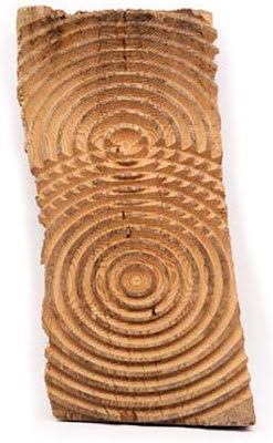 oak slab with two two centers with concentric circles radiating out, overlapping in middle of slab