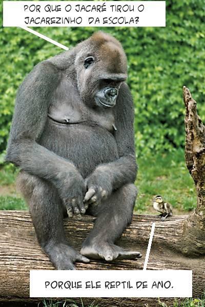 gorila, patinho, zoologico, escola