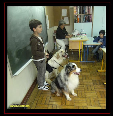 Dogs went to school